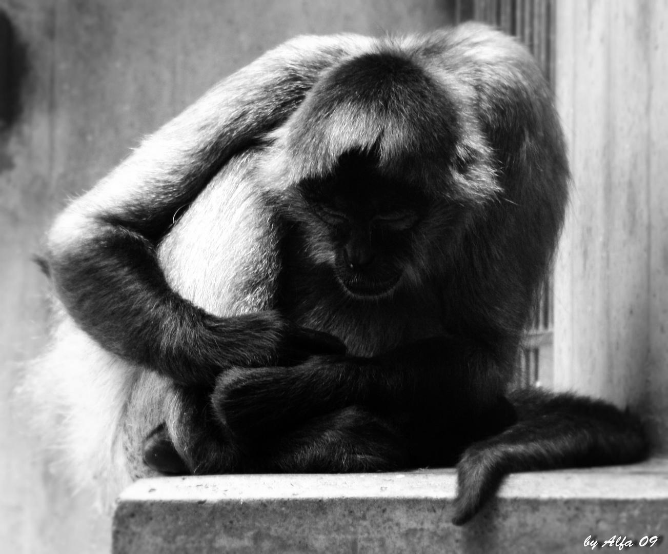 guts n chtle foto bild tiere zoo wildpark falknerei s ugetiere bilder auf fotocommunity. Black Bedroom Furniture Sets. Home Design Ideas