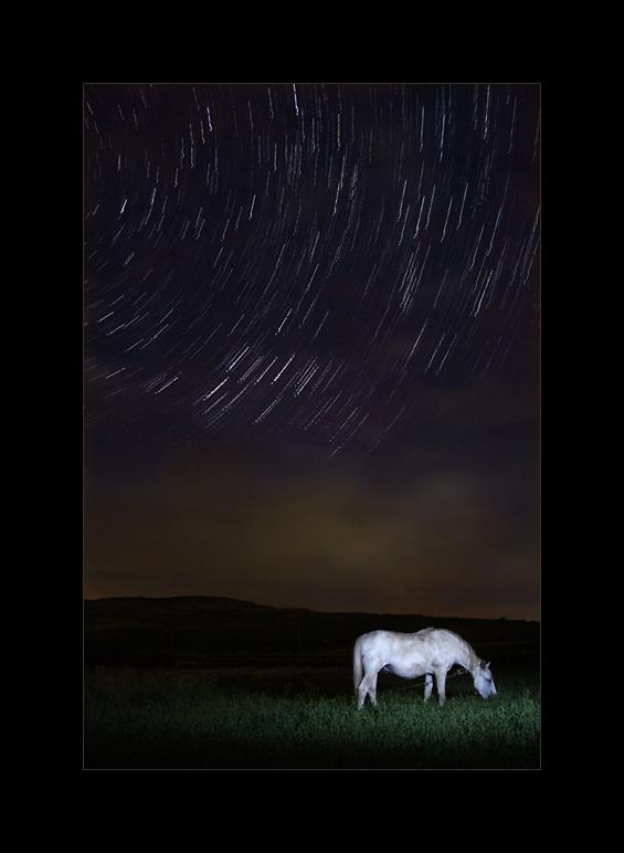 Gutza the Horse and the Stars Wheel