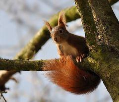 Gymnastic a la Eichhörnchen :-)