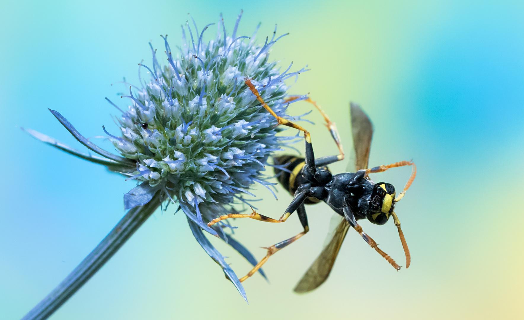 Gymnastik Foto & Bild | tiere, wildlife, insekten Bilder