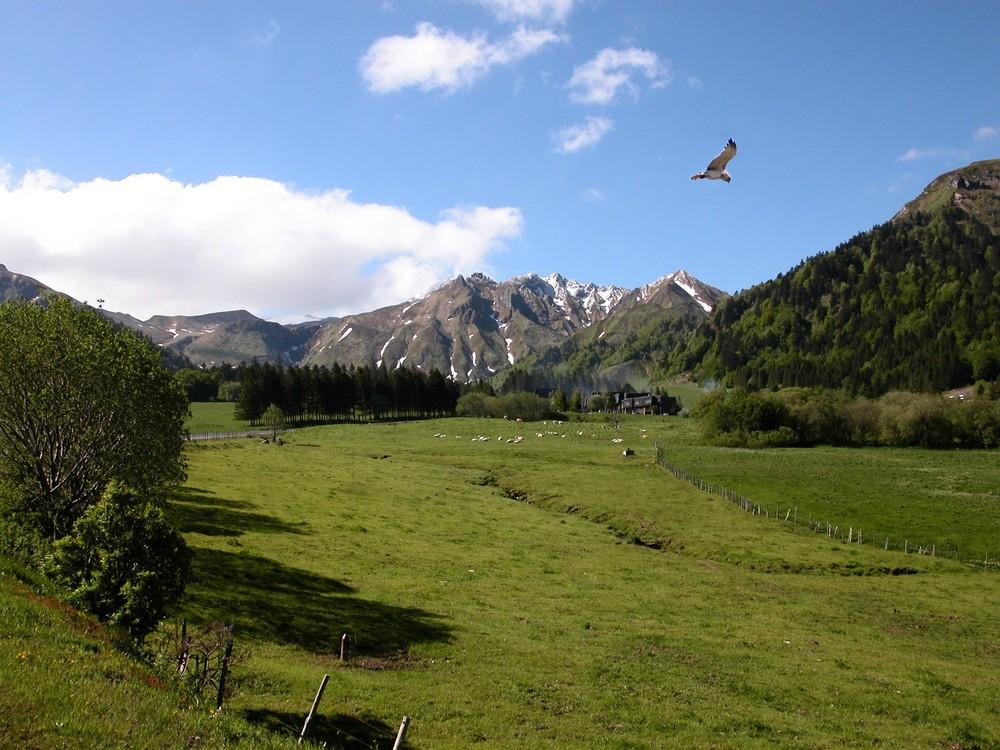 Gypaete dans le massif central (FRANCE)