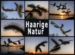 Haarige Natur