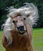 Haarspray versagt?