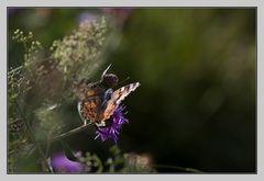 Hab auch mal ein Schmetterling