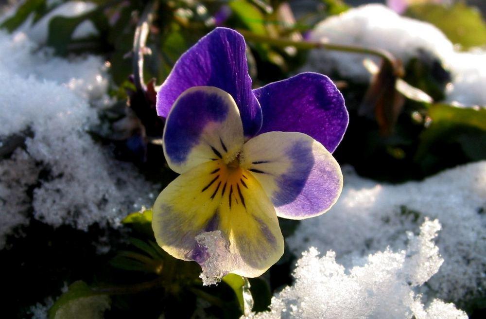 Hab den Frühling gesehen