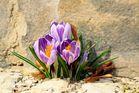 Hab ein Stück Frühling gefunden.....