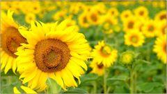 ... hab Sonne im Herzen ...