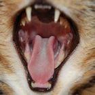 Habe ich Belag auf der Zunge?