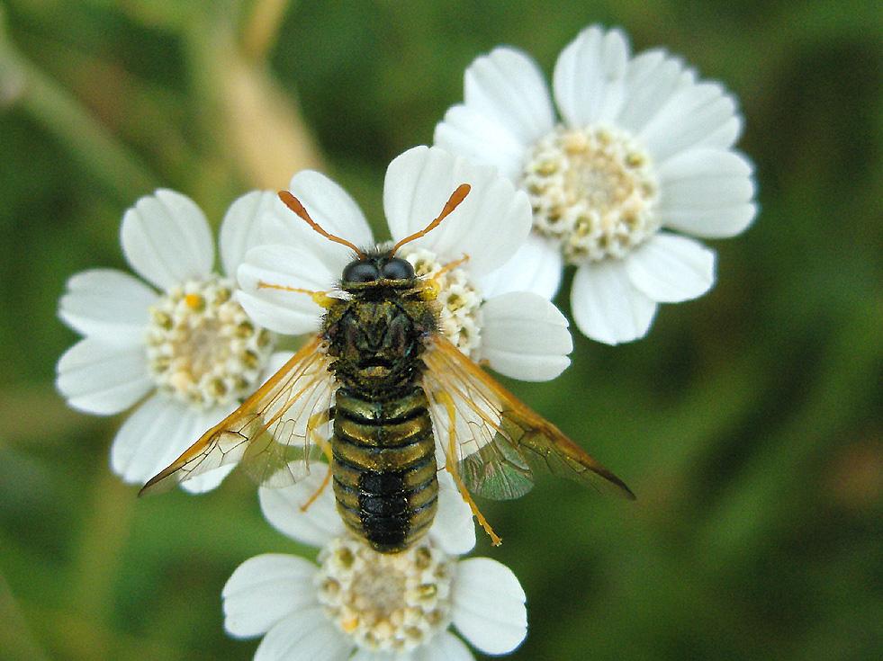 Habe keine Ahnung, was es für eine Insektenart sein könnte
