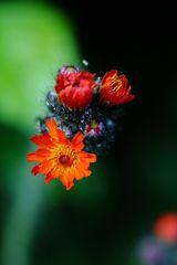 Blüten/Pflanzendetai