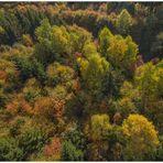 Habichtsperspektive: Herbstbunter Solling...