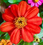 Habt ein schönes Wochenende und eine Blüte von mir