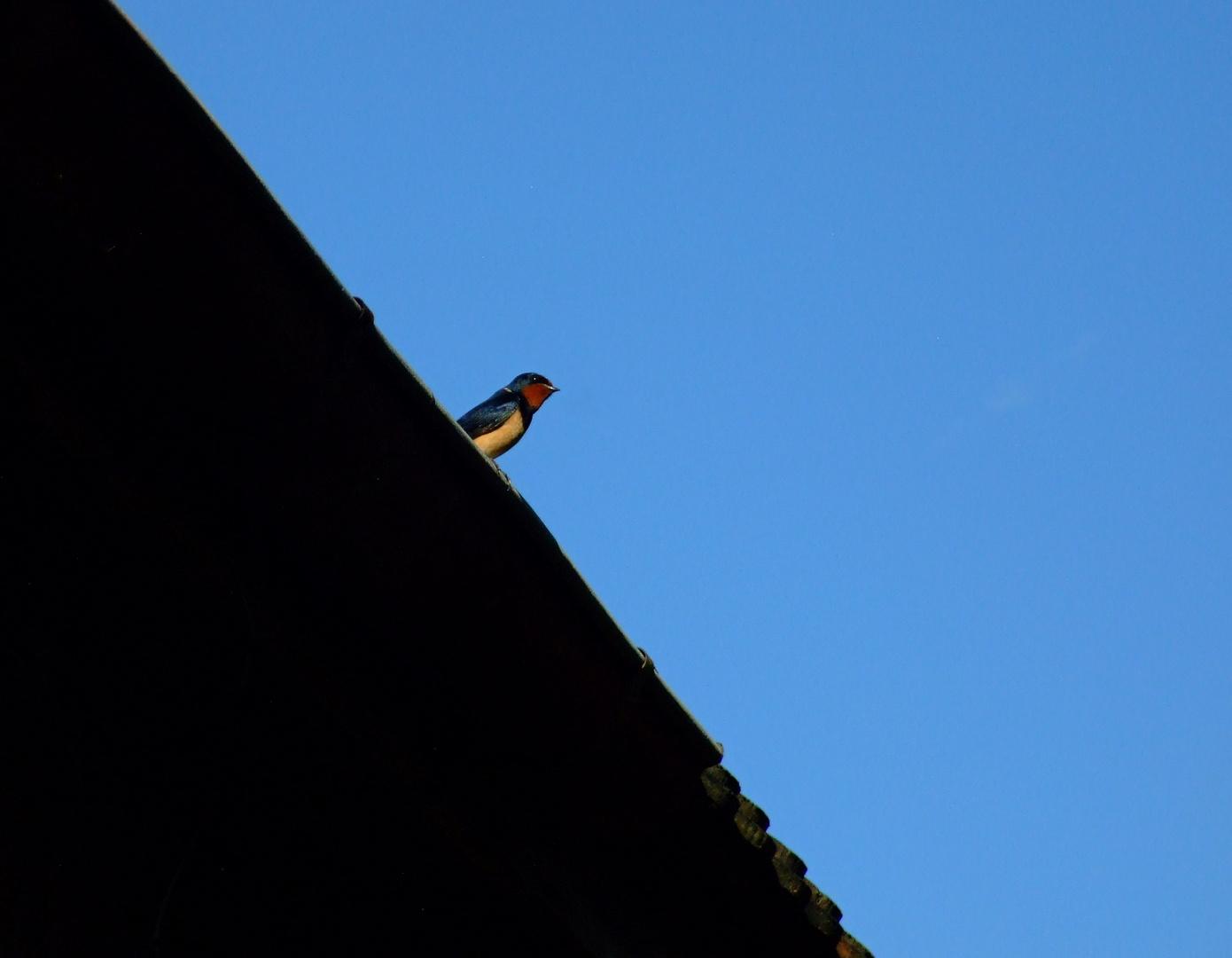 °°° Habt ihr auch einen Vogel °°°