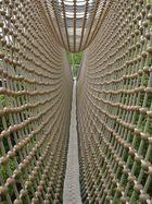 Hängebrücke im Baumkronenpfad