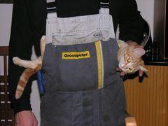 Hängematte für Kätzchen ...