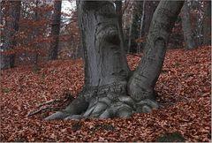 Häufig trifft man im Wald ...