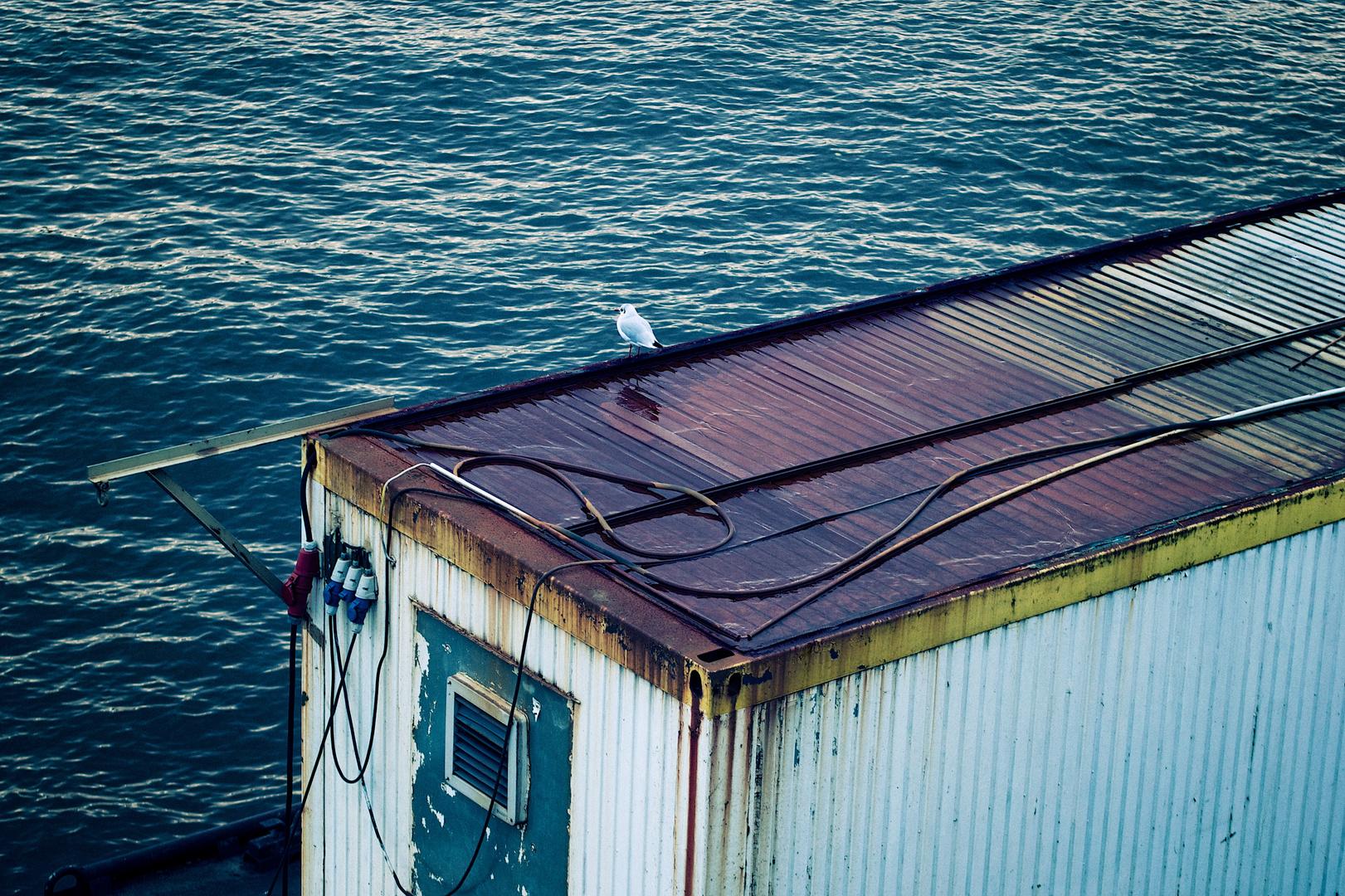 Hafen und Möwe