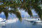Hafenpalmen