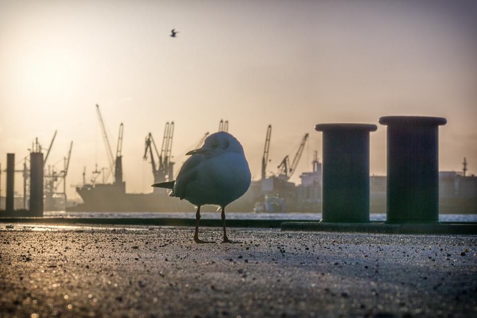 Hafenperspektiven 159.0