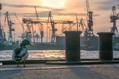 Hafenperspektiven 160.0