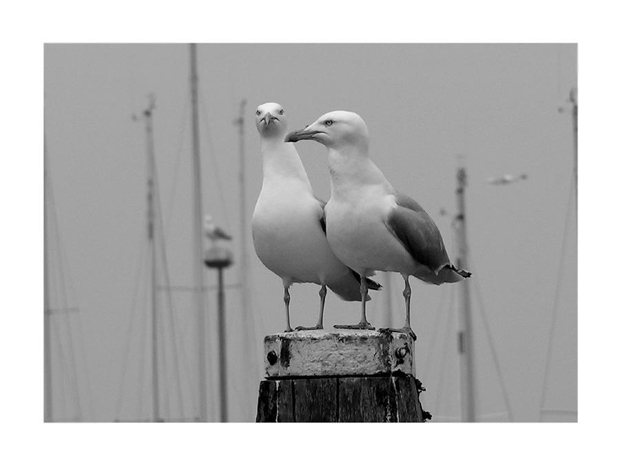 Hafenwächter#1