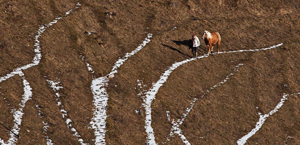 Haflinger mit Begleiterin auf dem steilen Weg zurück zum Gestüt!