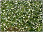 - Hagelkörner und abgeschlagene Ginkoblätter-