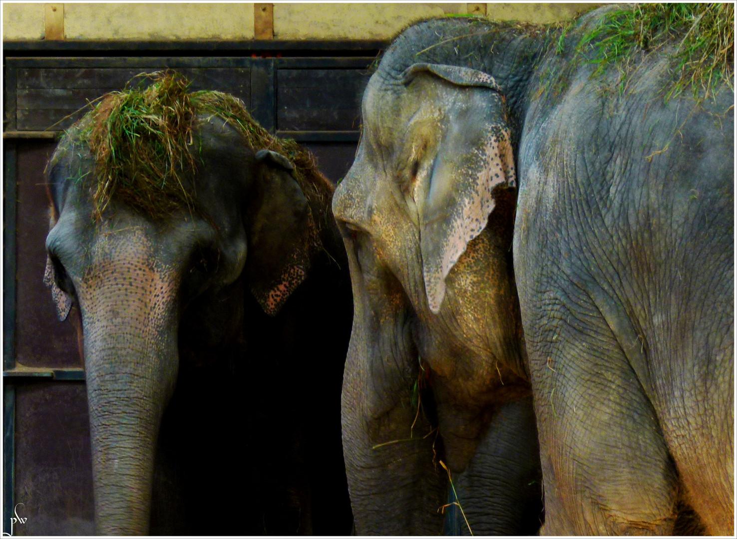 Hagenbecks Elefanten - Small talk