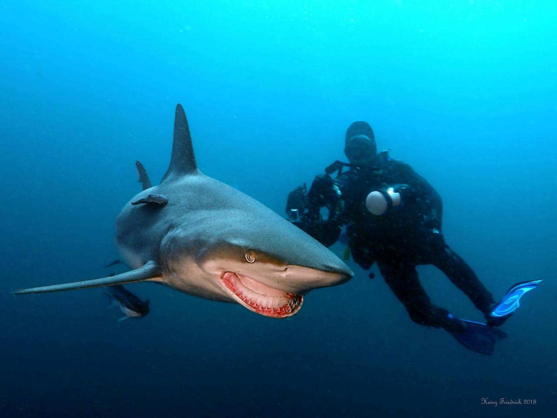 Hai Begegnungen