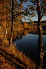 Haider Herbst