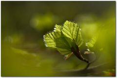 Hainich Frühling