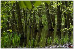 Hainich Mangroven