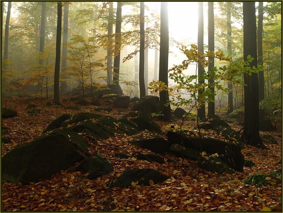 Hainsimsen-Buchenwald im Naturschutzgebiet Heilige Hallen (Sebnitzer Wald)