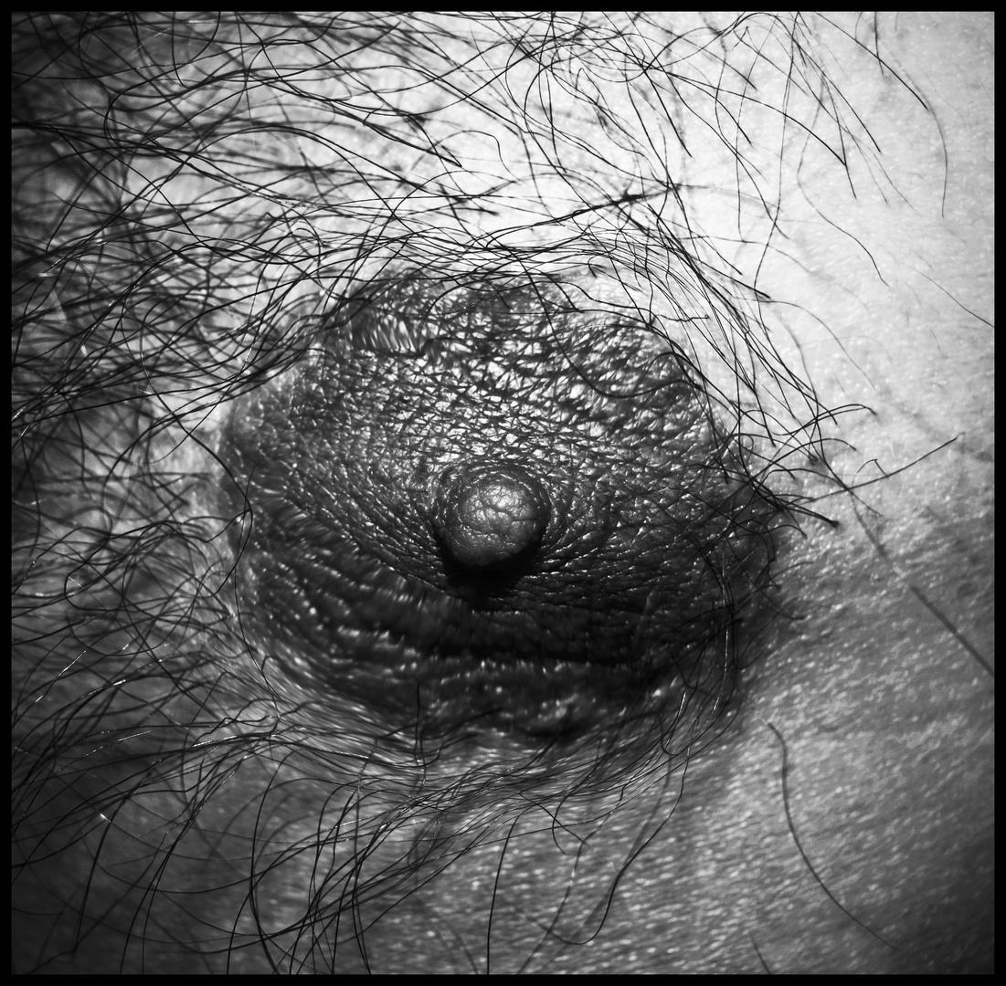 hairy Nipple