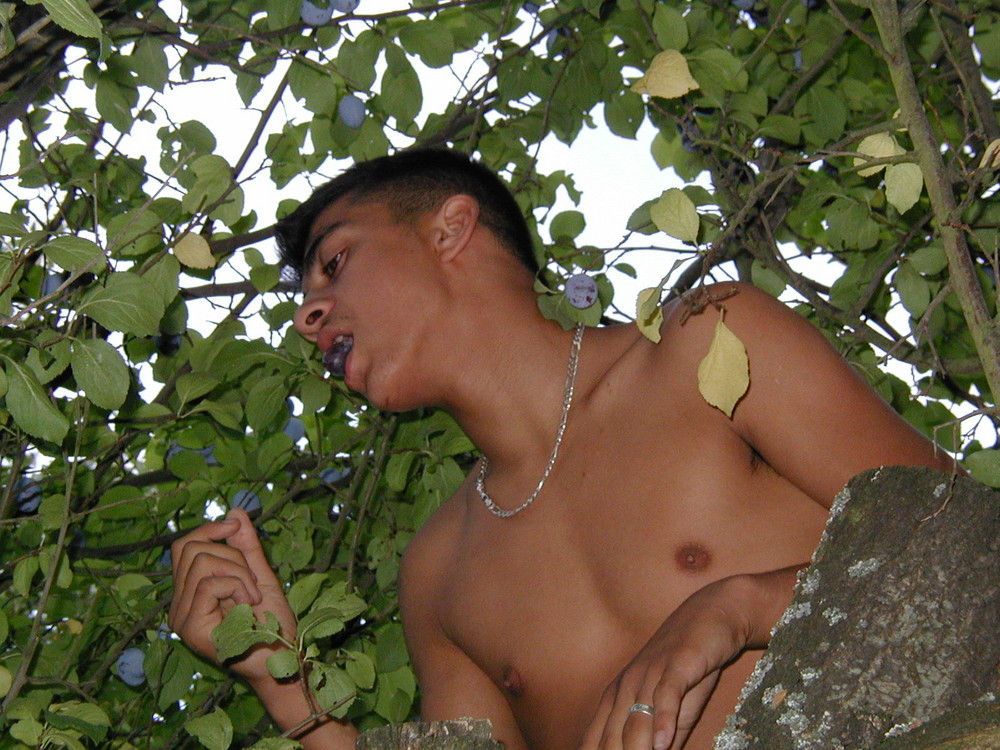 Hakim im Pflaumenbaum