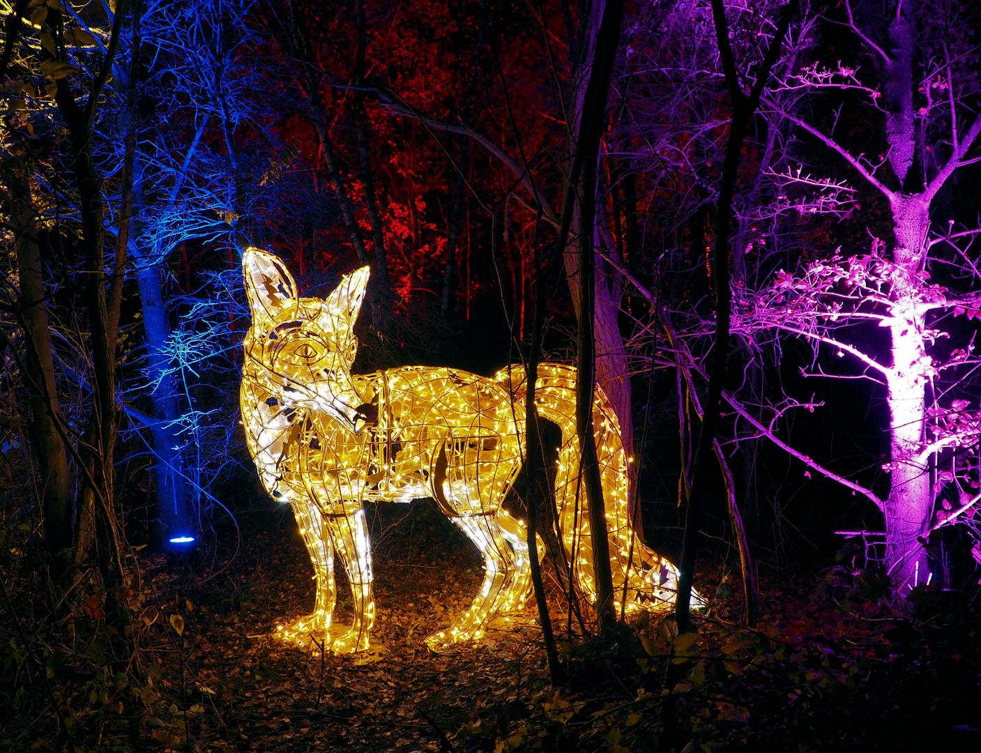 Haldenzauber der Fuchs