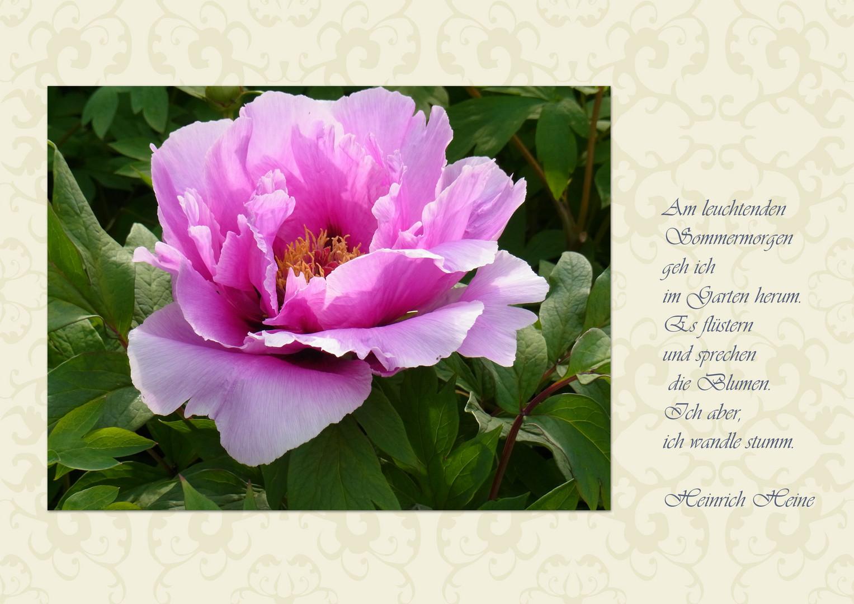 Hallihallo Bin Wieder Da Foto Bild Karten Und Kalender Blumen