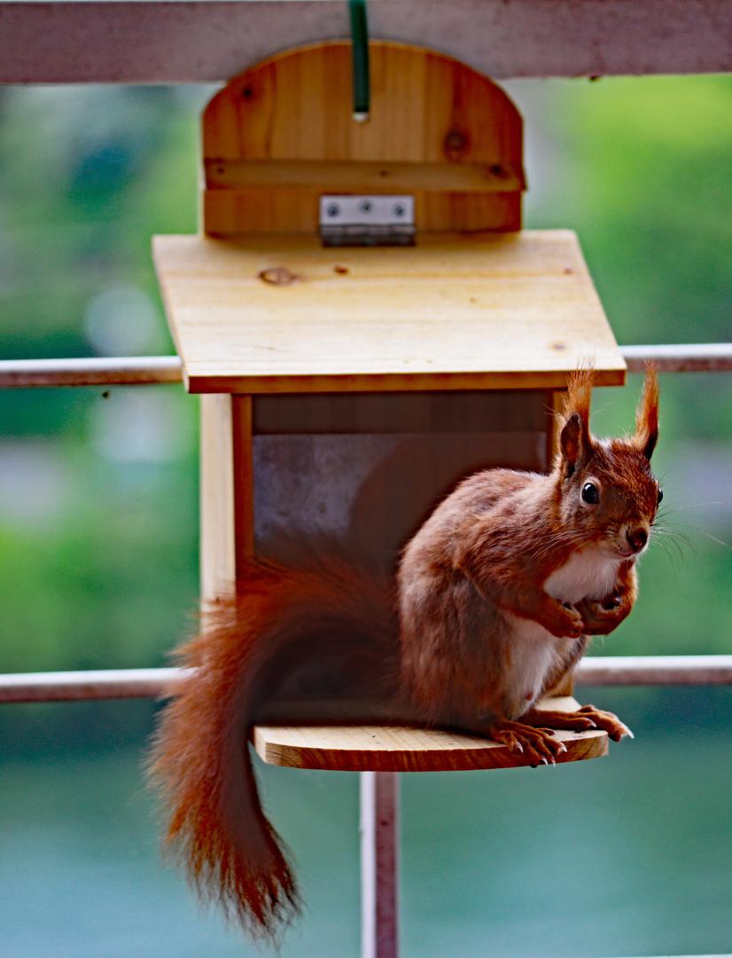 """""""Hallo, die Nüsse sind alle"""""""