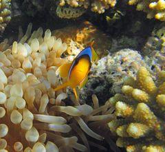 Hallo! Ich bin Nemo, wer bist Du?