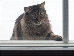 Hallo? Lasst mich rein!