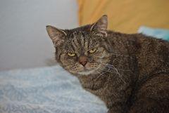 Hallo Leute,ich will mal was klarstellen.Ich bin die Mucki und bin ein Katzenmädel!