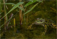 Hallo mein Frosch