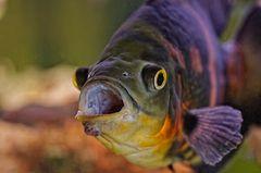Hallo versteckt euch alle - heute ist Fischtag ....