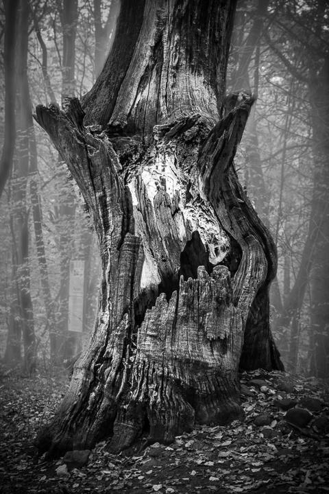 Halloween Baum