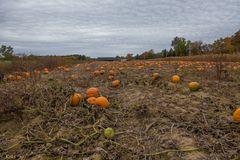 Halloween-Land