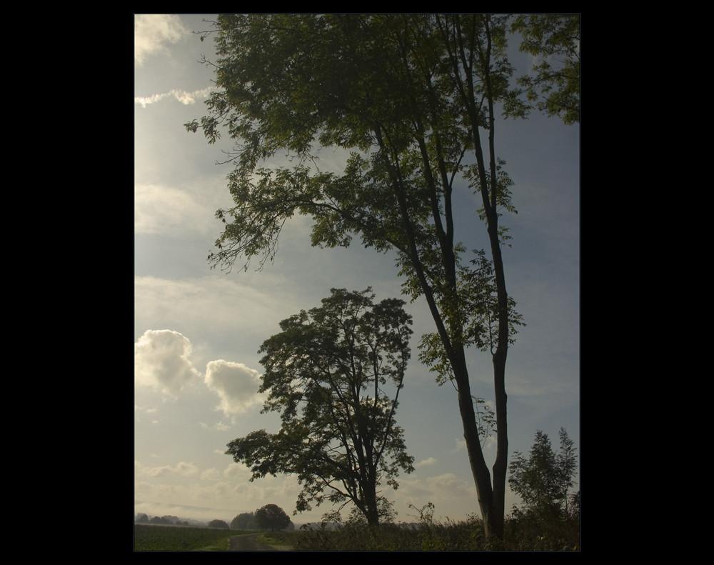 HALT´ INNE, Wanderer, und schaue hinauf... ! - oder: wie Bäume die Landschaft prägen...