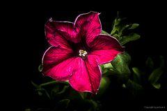 Halt Stopp ! Hier ist die Schönheitszone  -Mittwochsblümchen-##1495#