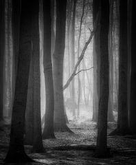 Waldesstille