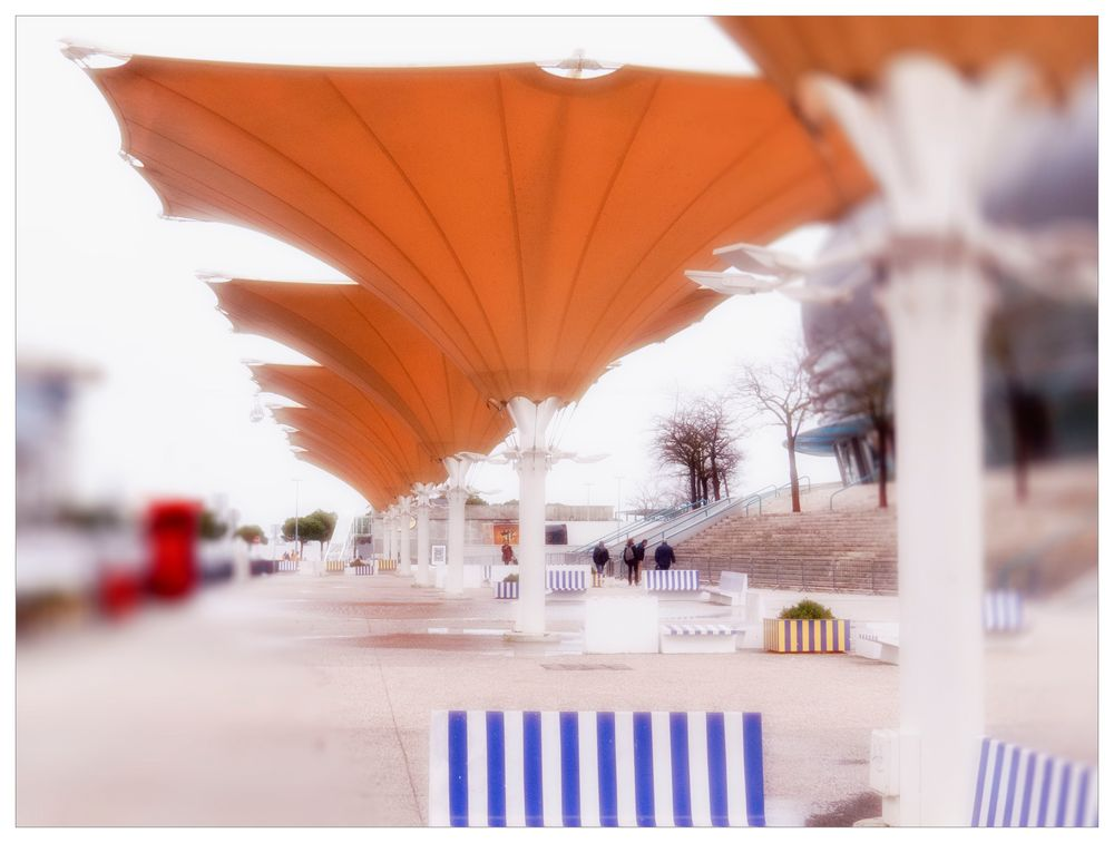 Haltbare Mittwochsblümchen aus Lissabon