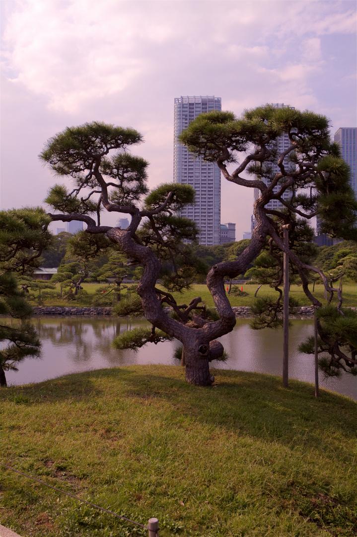 Hama Rikyu garden Tokyo